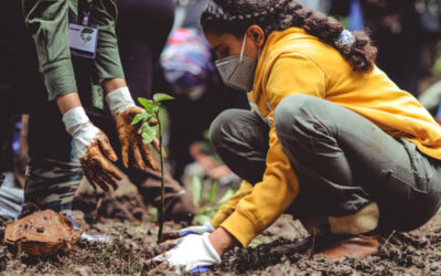 🌲 Tree planting apps, Elon tweets, and Tik Tok integrations